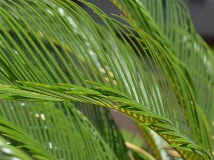 Met Palmzondag begint de Goede Week